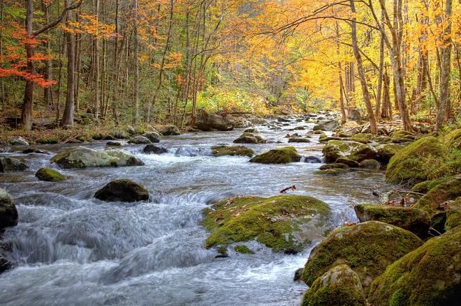 Mindfulness fordybelsesdag - stilhed i naturen