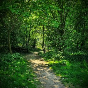 meditationskursus 2 - dyb stilhed i skov