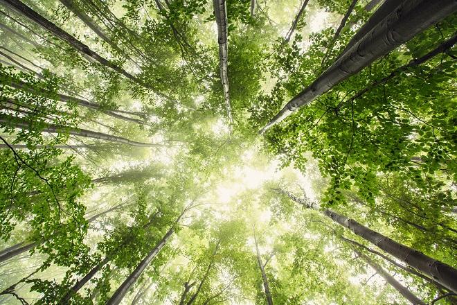 Afslapning I Skoven