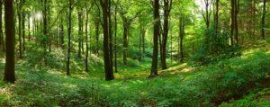 Lyt til skovens stilhed