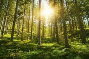 Skoven giver dig bedre søvn